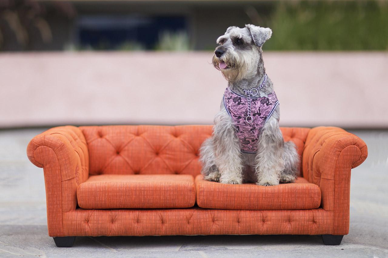 Camas Para Perros Grandes En Lima Sofas Para Perros Y Gatos Nuku Pe