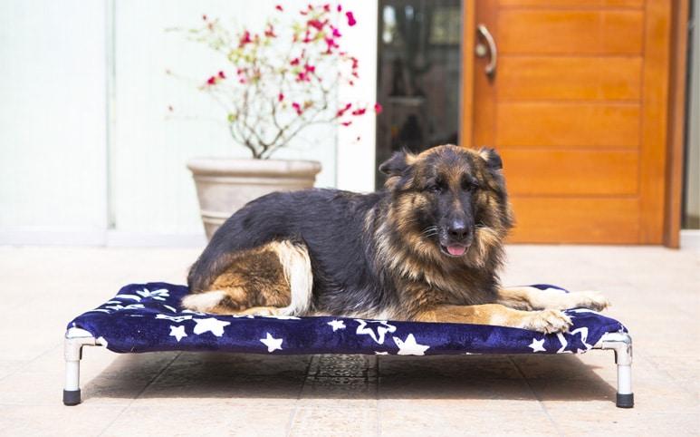 cama para perro peru