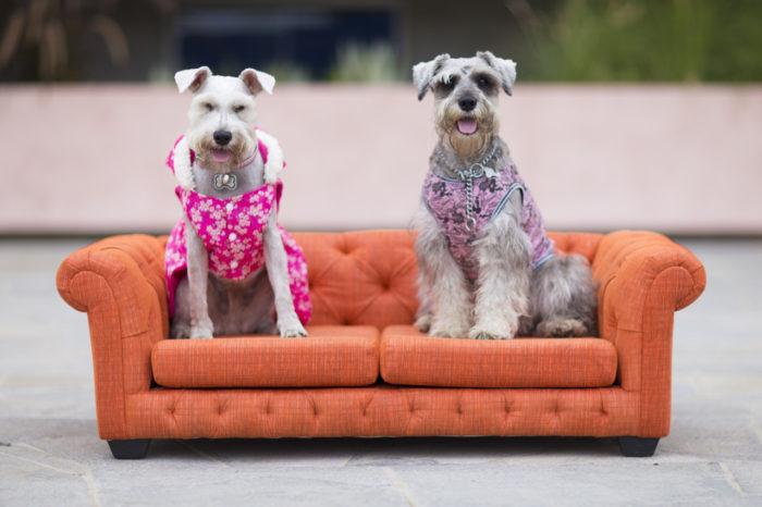 Camas y sofás para perros en Lima Peru