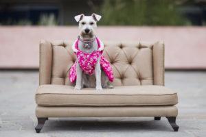 Sofa Victoria - Camas para perros